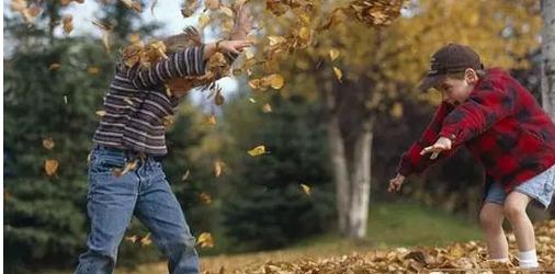 秋天的落叶也会发芽
