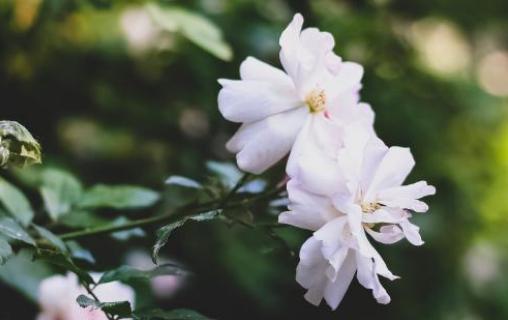 异国花香,花美无国界