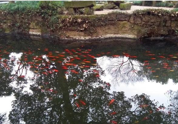 这是我的故事,关于一条河和一条金鱼的故事。