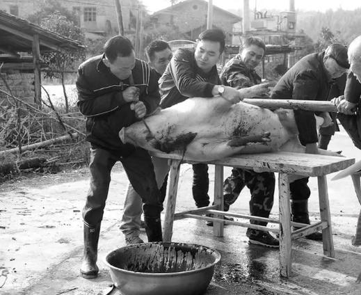 杀猪为过年