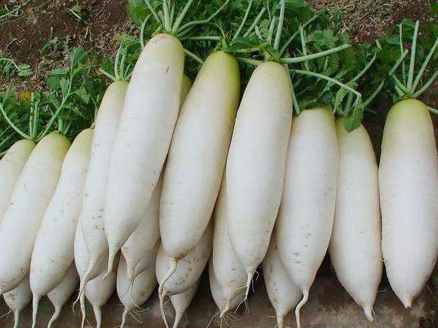 小岩:白萝卜及其他