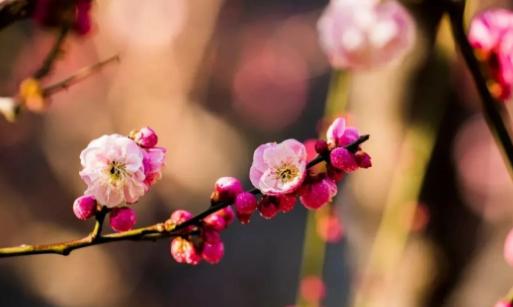 我在春日里等春来