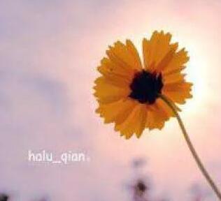 感受一朵花的美好